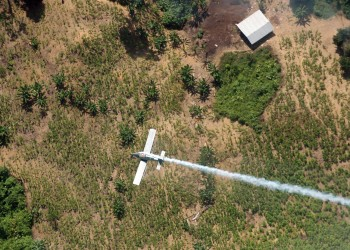 FILE - In this June 4, 2008 file photo, a police plane sprays herbicides over coca fields in El Tarra, in the Catatumbo river area, near Colombia's northeastern border with Venezuela. Colombia will resume using weed killer to destroy illegal coca crops less than a year after suspending its use due to cancer concerns. Defense Minister Luis Carlos Villegas said on Monday, April 18, 2016, that instead of dumping glyphosate from American-piloted crop dusters, the herbicide will now be delivered manually by eradication crews on the ground. (AP Photo/Luis Robayo, File)